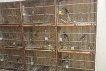 Guarda Ambiental de São Bernardo acaba com tráfico de aves silvestres