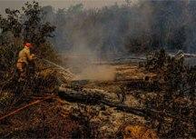 Fogo engole 64,8% do Parque Estadual Encontro das Águas em MT. Foto: Mayke Toscano/Secom MT/ABr
