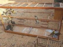Animais eram caçados na natureza e vendidos por meio das redes sociais. Foto: Divulgação/Polícia Federal