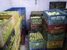Banco de Alimentos distribui 39 toneladas de comestíveis; Foto: Divulgação/PMD