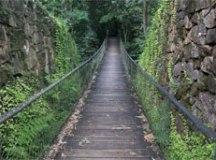 Parque Estadual da Serra do Mar. Foto: Rogério Casemiro/ Mtur