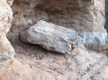 Exemplar pode ser de espécie que habitou a região há 65 milhões de anos. Foto: divulgação