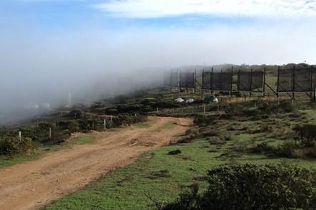 Chilenos elaboran la primera cerveza del mundo que utiliza agua de niebla