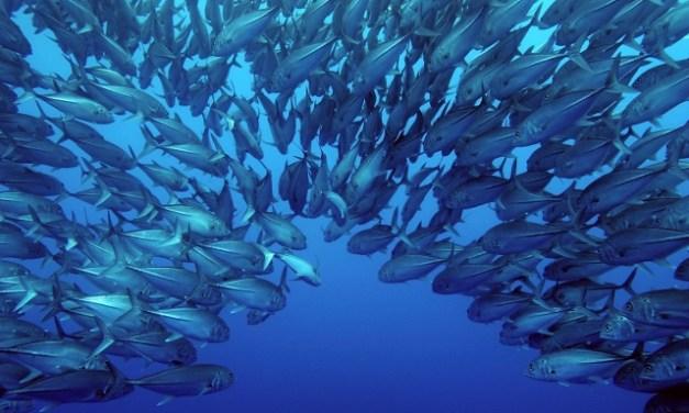 Columna: Medidas para la sostenibilidad del sector pesquero: ¿son éstas suficientes?. Por Daniela Díaz, Director General de Green Community