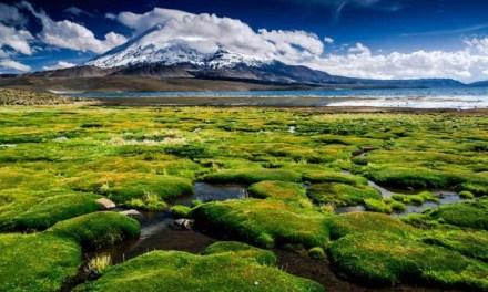 Anuncian creación de Agencia Chilena de Cambio Climático