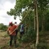 El programa de reforestación de Faber-Castell