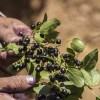 Mujeres de Robinson Crusoe buscan innovar en alimentos saludables