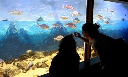 Inauguran en el puerto el primer acuario interactivo de Chile