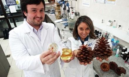 Aceite de semilla de pino: El inédito proyecto que previene la obesidad y la diabetes