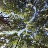 Manejo sustentable de bosques nativo, una oportunidad para Chile. Por Rodolfo Tirado, gerente general de Ignisterra