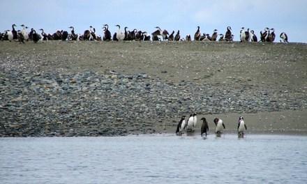 Consejo de Ministros para la Sustentabilidad aprobó creación de dos nuevas áreas protegidas en las regiones de Los Lagos y Magallanes