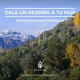Dale un respiro a tu país, comienzan las primeras reforestaciones masivas del proyecto Reforestemos Chile Nativo.