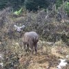 Día internacional del huemul: Ministerio del Medio Ambiente impulsa proyecto que protegerá a especies amenazadas