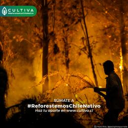 A un año de los incendios forestales ¿Qué se ha estado haciendo?