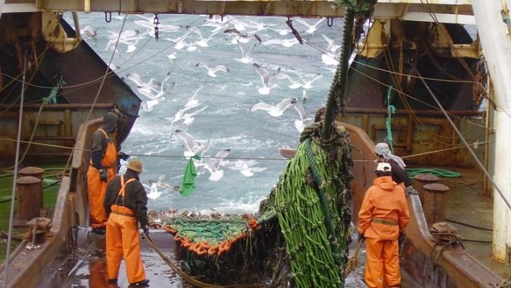 Restricción a la pesca de arrastre: lo mejor del 2017 para las pesquerías chilenas según WWF Chile