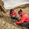 Hallan restos de un dinosaurio semiarticulado en Magallanes