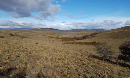 Familia Torres reforestará extensa área de la Patagonia chilena