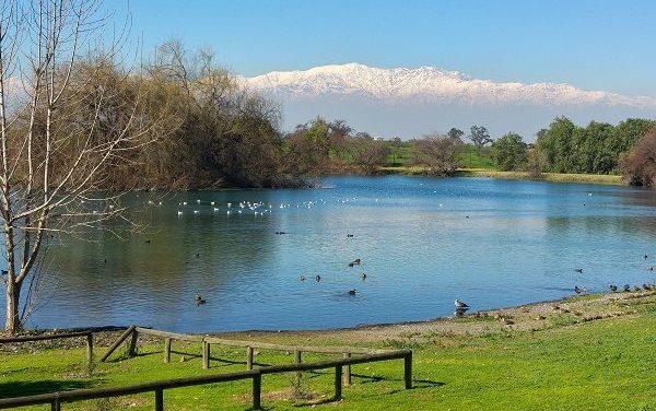 Pulmón verde dentro de Santiago: Laguna de Aguas Andinas alberga a más de 32 tipos de aves y otras especies