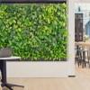 Mejora la productividad con naturaleza: Beneficios de los muros verdes en la oficina