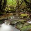 Natura apuesta por conservación de la Selva Valdiviana
