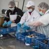 Pequeños proveedores de Los Lagos abastecen supermercados de Arica a Puerto Montt