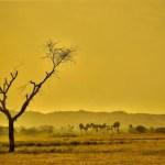 La gestión sostenible de los suelos es clave para enfrentar la crisis climática: reporte del IPCC