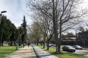 Arbolado urbano: nuevo rol en la planificación de las ciudades
