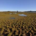 Consejo de Ministros aprueba protección para humedales del Río Maipo y Maullín