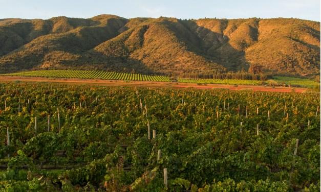 Viña Concha y Toro es la primera empresa vitivinícola en el mundo que certifica sus bosques nativos bajo FSC®