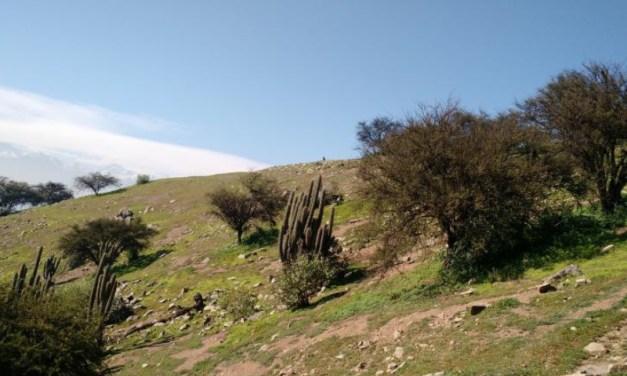Ejecutaran programa de mejoramiento de la biodiversidad en Pucara de Chena