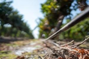 Viña Concha y Toro es la primera viña chilena en obtener máxima calificación en CDP del Agua