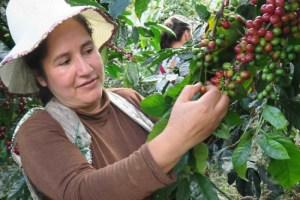 Café Femenino: producidos y comercializados enteramente por mujeres