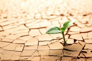 Debate en el plano ecológico: ¿Existe una relación directa entre el cambio climático y la pandemia?