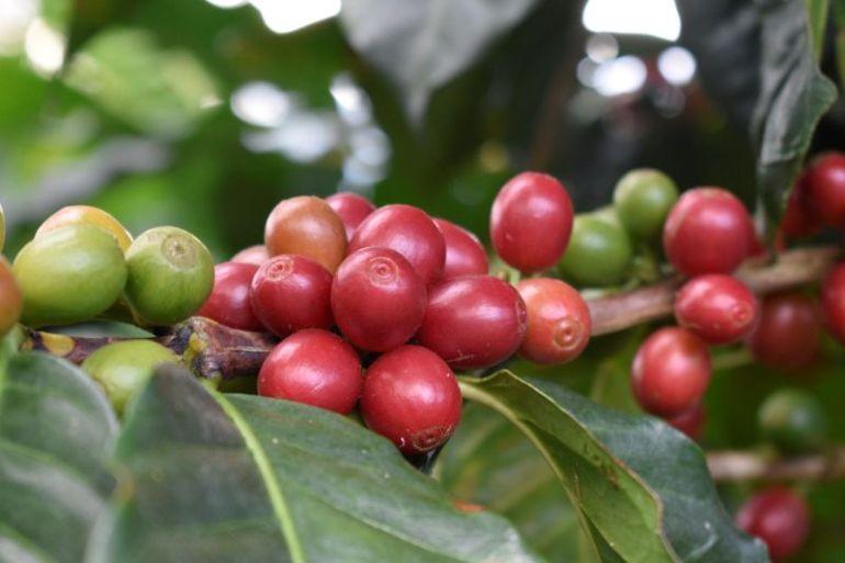 Rainforest Alliance anuncia nuevo programa y estándar de certificación