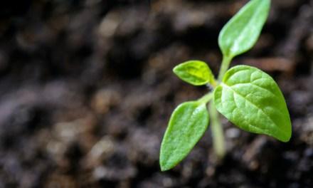 5 cursos online gratuito para aprender cómo cuidar al planeta desde casa