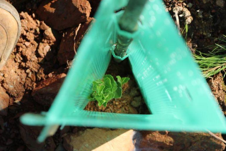 Fundación Reforestemos lanza nueva plataforma web que permite plantar árboles nativos desde la casa