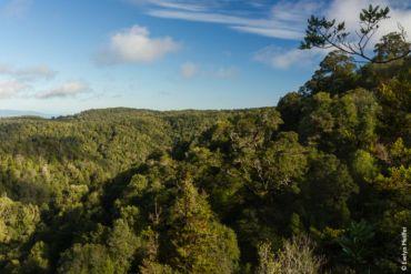 WWF Chile: el país debe aprovechar la oportunidad de que la protección del medio ambiente sea una parte estructurante en una nueva Constitución