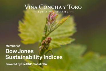 Viña Concha y Toro obtiene grandes resultados en Índice de Sustentabilidad Dow Jones 2020