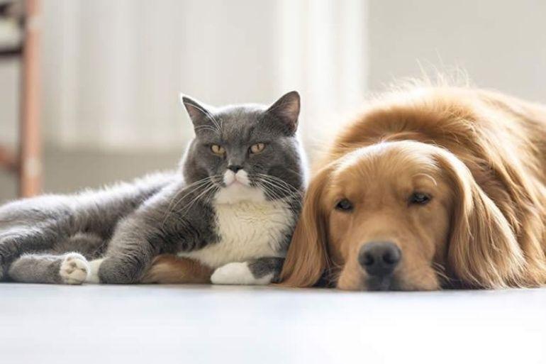 NESTLÉ Purina duplicó fondos debido a la excelencia de los proyectos científicos recibidos para mejorar la vida de las mascotas