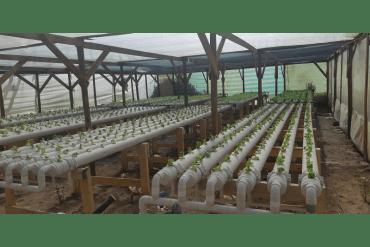Agricultores del altiplano inician cultivos hidropónicos: ahorran un 80% de agua en producción