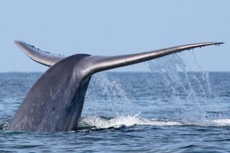Día de las Ballenas: seis grandes datos de estos gigantes del océano