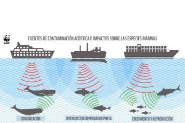 Ruido submarino: una amenaza latente para las ballenas en el Golfo de Corcovado