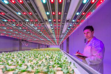Iluminación LED: Mejorar la disponibilidad de alimentos y el rendimiento de los cultivos