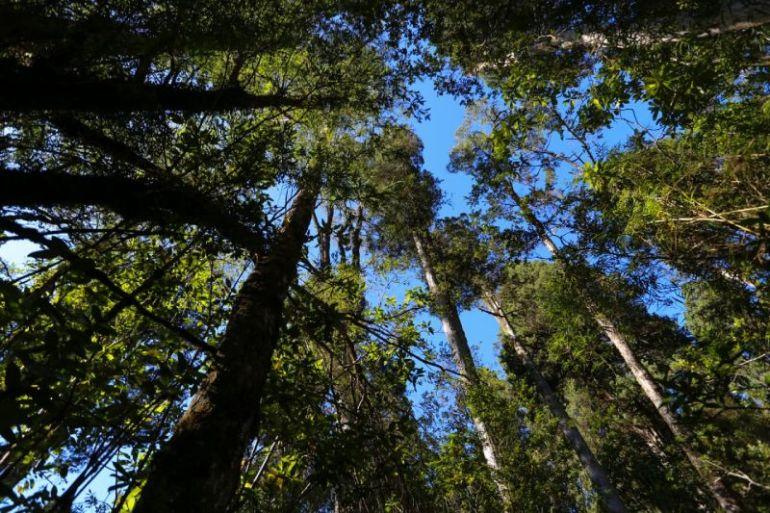 Lanzan proyecto +Bosques para la gestión sustentable de más de 25 mil hectáreas de bosque nativo en Chile