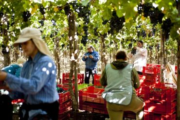 Cómo crear mi primera cooperativa: FIA abre curso hasta el 03 de mayo para todos los agricultores de Chile