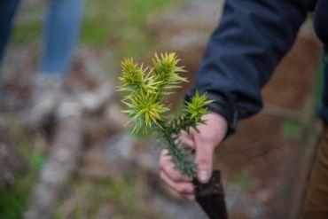 Restaurar bosques por la naturaleza y las personas