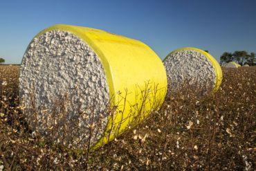 Cotton Council International llega a Chile con protocolos de producción alineados a los ODS de Naciones Unidas