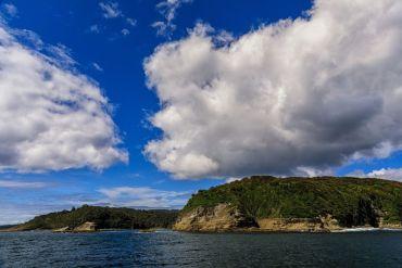 Isla Guafo: lanzan libro y llaman a concretar medidas de protección