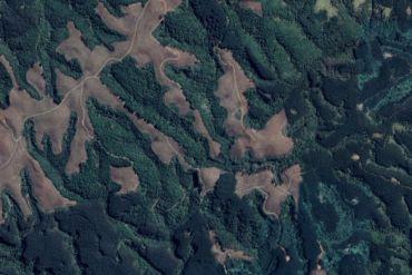 Laboratorio impulsa investigación que apoya toma de decisiones para el manejo sostenible de los bosques