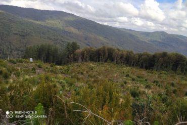 """Con """"Centinelas Virtuales"""" monitorean fauna en la Cordillera de Nahuelbuta"""